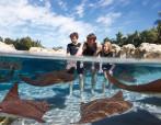 Ray Lagoon and Family