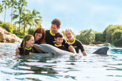 Dolphin with Family