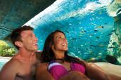 Fish Grotto - Teen Couple