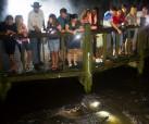 Gator Nightshine Experience