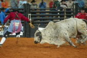 Rodeo at OHP
