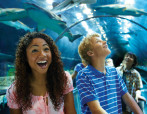 Shark Encounter Tunnel