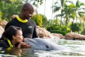 Discovery Cove Dolphin Swim