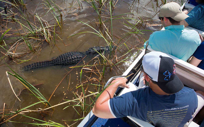 Everglades Experience