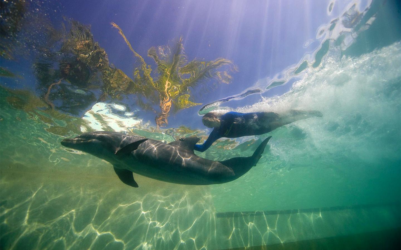 Dolphin odyssey