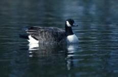 Ventura Water Treatment Plant Wildlife Ponds