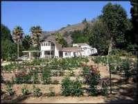 Love House Dahlias