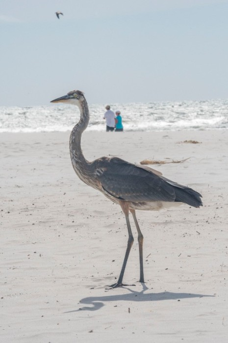 Availibility For Sandy Castle Gulf Shores Al Vacation Rental