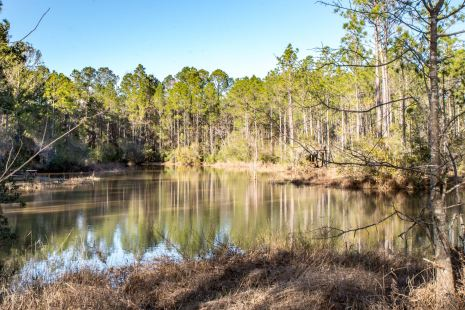 Gulf Shores Wetlands Nature Park