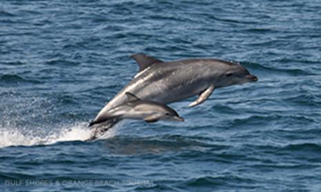 Orange Beach Private Dolphin Family Safaris