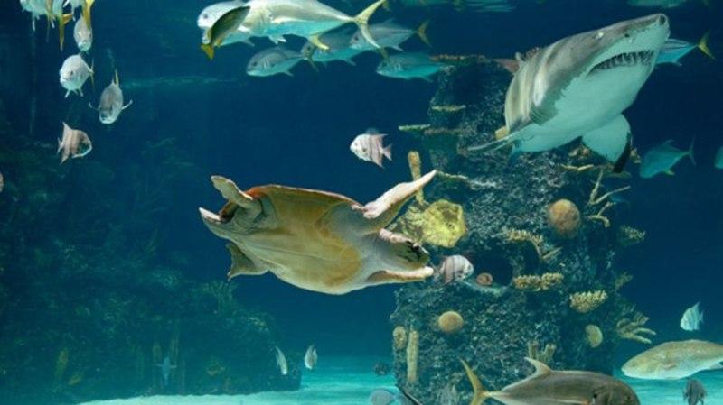 photo relating to Newport Aquarium Coupons Printable named Newport aquarium discount coupons - No cost coupon codes for full line