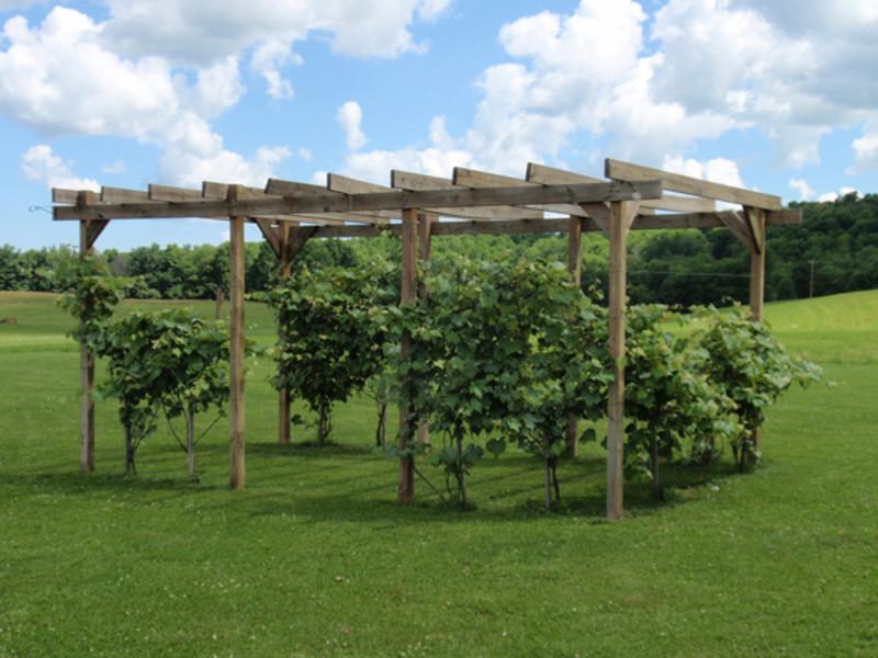 Rustic Ridge Winery
