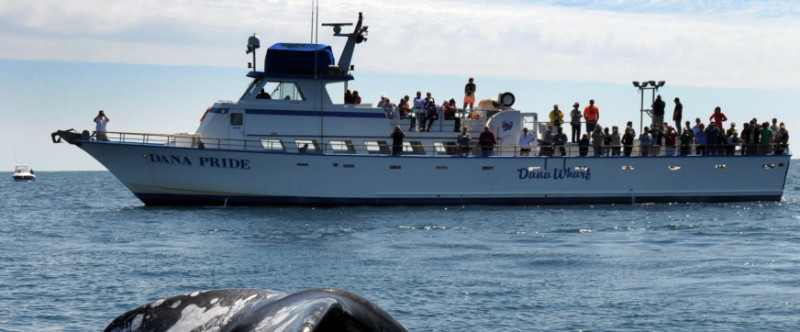 Dana Wharf Sportfishing and Whale Watching Image