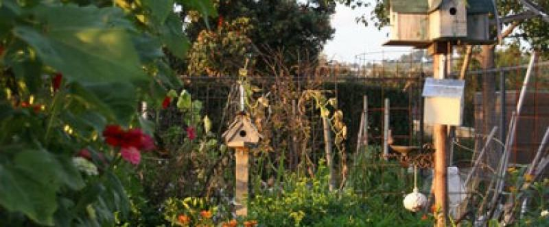 Harry Otsubo Gardens Image