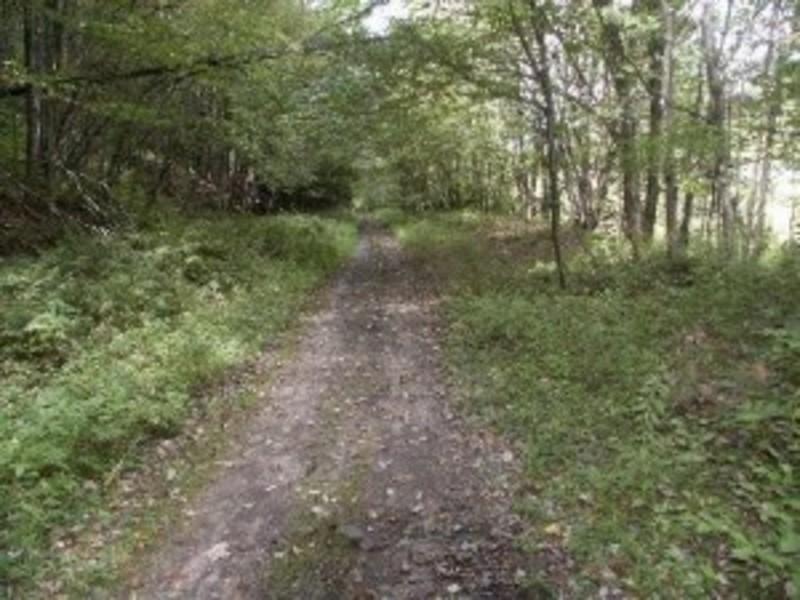 Parksville O&W Rail Trail