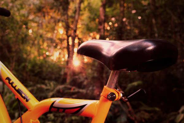 Bike in woods (stock)