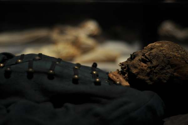 mummies of the world hmns