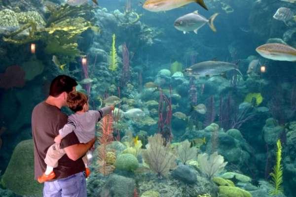 the_florida_aquarium_w640