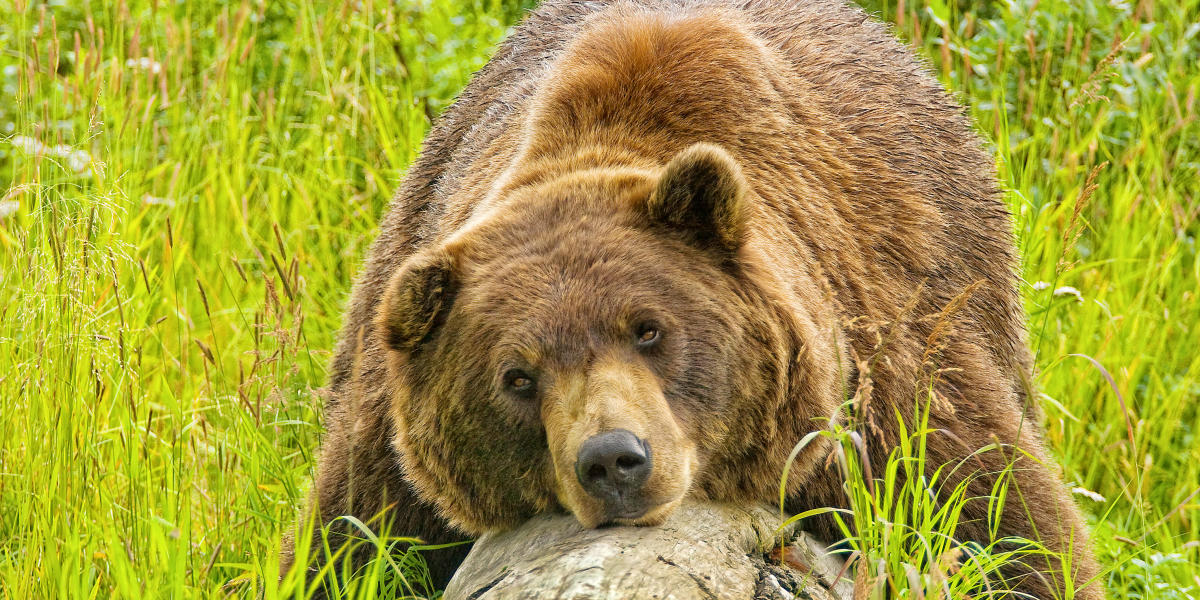 Parks Auto Sales >> Wildlife Viewing | Visit Anchorage