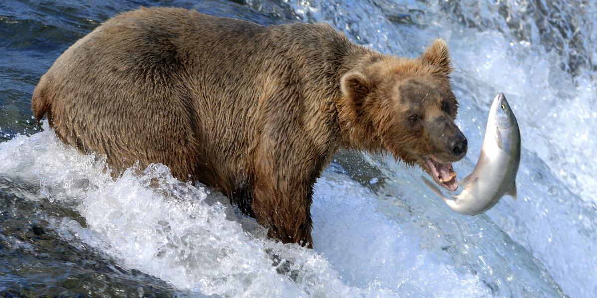 Katmai National Park Visit Anchorage