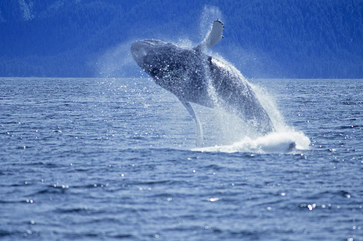 Glacier Amp Wildlife Cruises Visit Anchorage