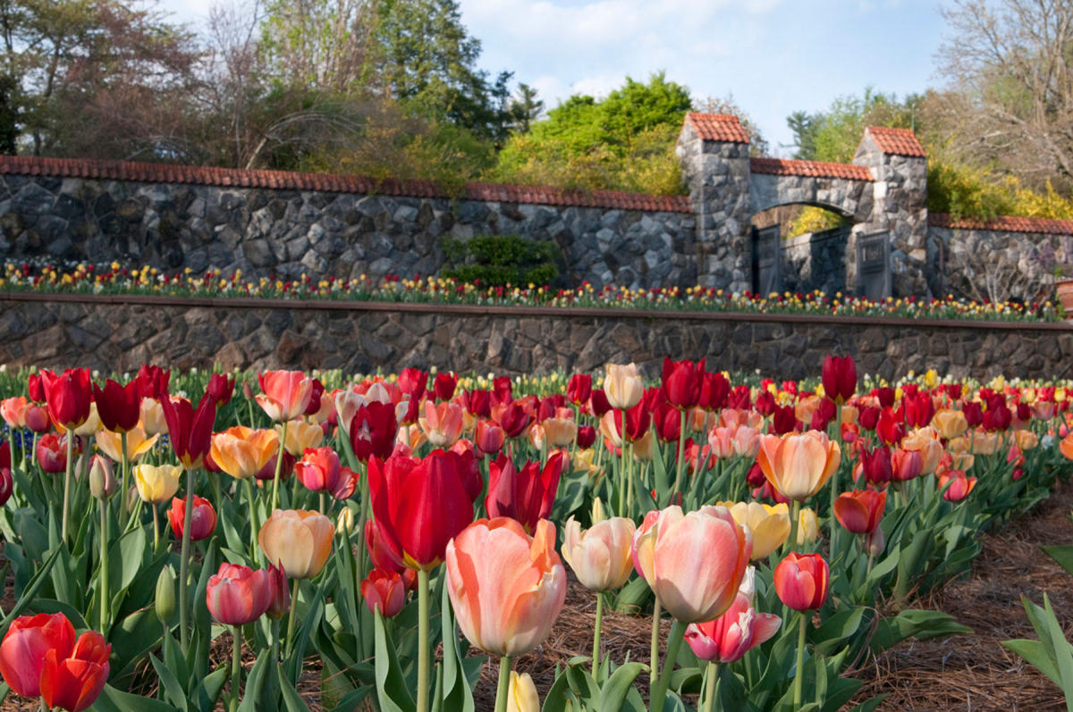 Biltmore Blooms Asheville March 20 2018 May 24 2018