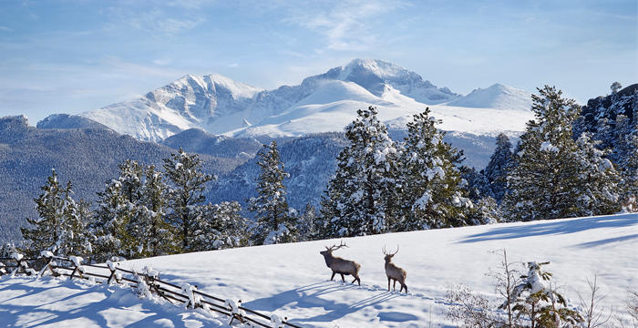Estes park colorado 39 s best kept winter secret for Winter park colorado cabins
