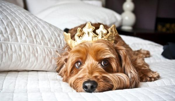 Image result for Pet-friendly hotels provide an opportunity for pet owners