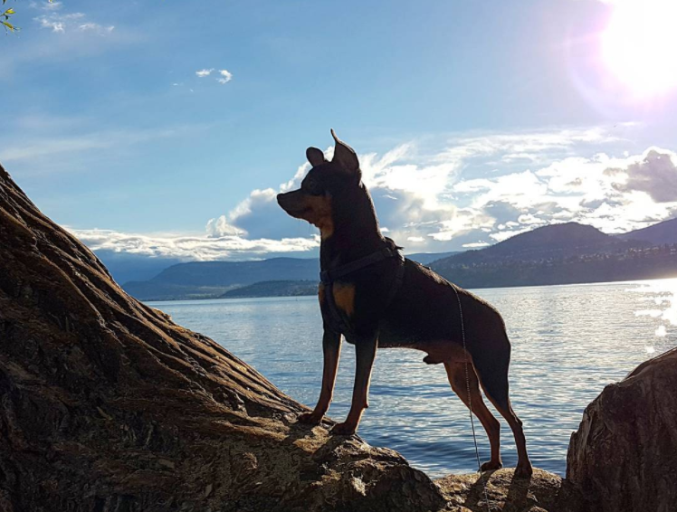 Visiting kelowna with a dog solutioingenieria Gallery