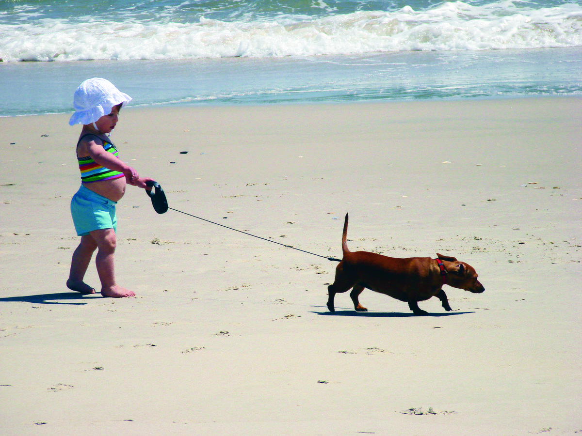 Dog Friendly Beaches Tybee