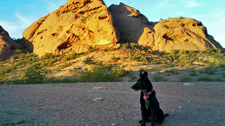 Dog friendly parks patios and trails in phoenix visitphoenix solutioingenieria Choice Image