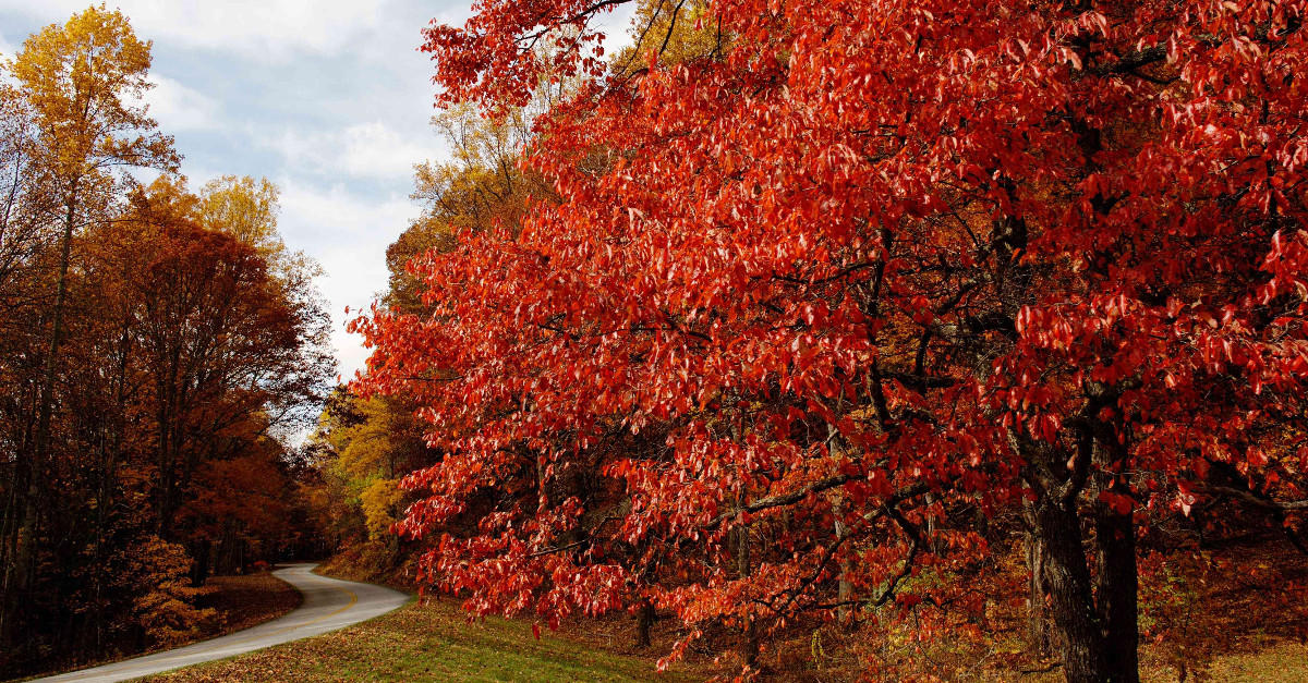 Best Places to See Fall Colors in the Blue Ridge Mountains