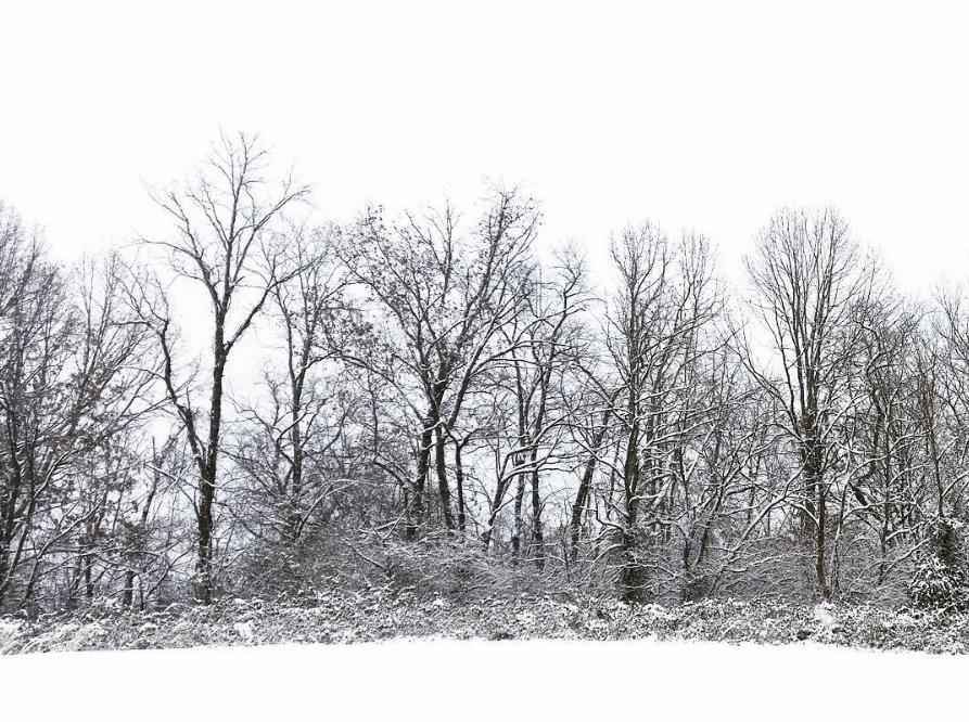 Photo Album First Snow Of 2017 In Virginia S Blue Ridge