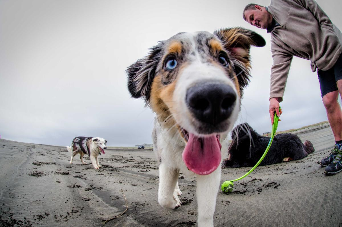 Pet Friendly Activities & Shops in Vancouver WA | Vancouver USA
