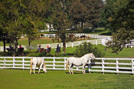 Horseback Riding at the Kentucky Horse Park