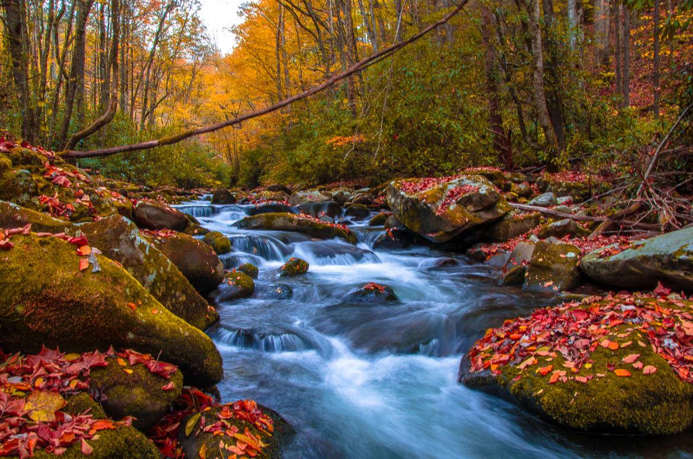 Cherokee River in Fall