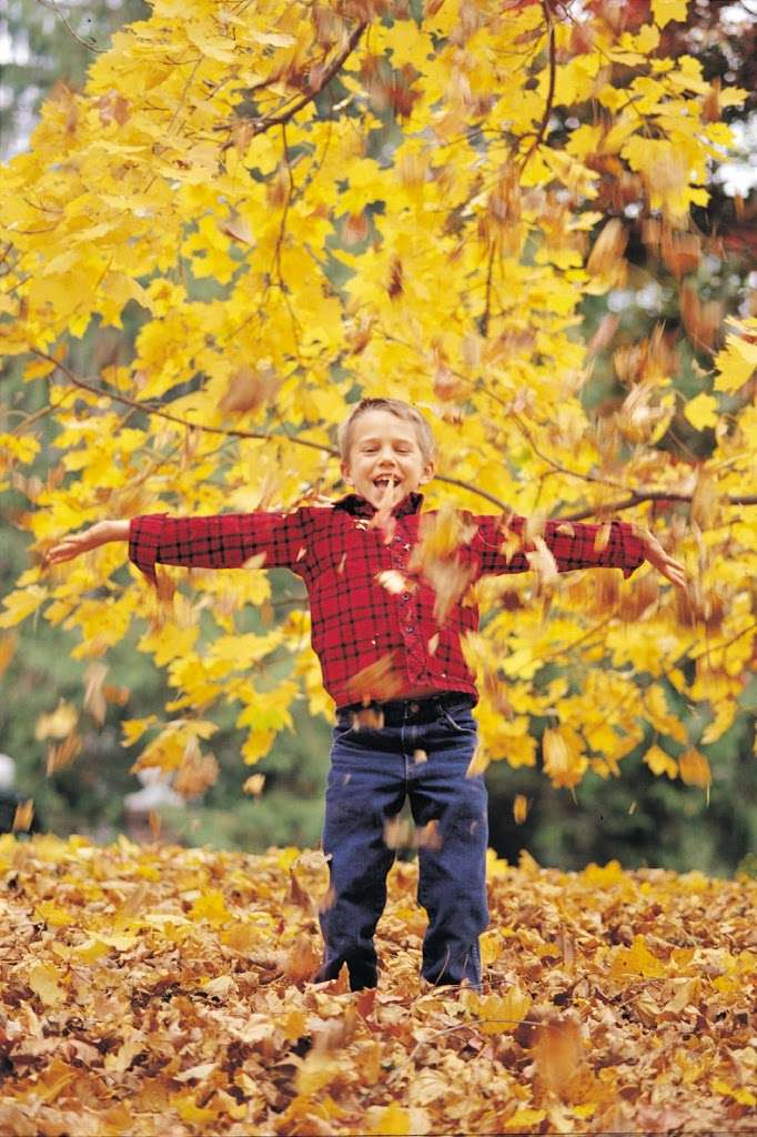 Fall Foliage Forecast