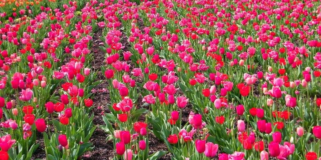 Asheville's Flower Power