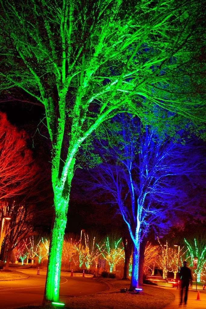 Winter Lights Dazzle the N.C. Arboretum