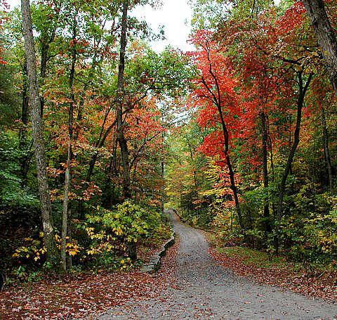 Fall Color Pictures at North Carolina Arboretum