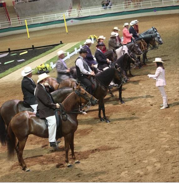 Paso Fino Horse Show Returns