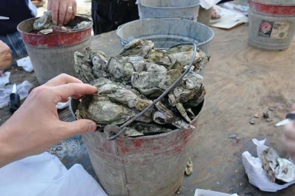Mountains to Sea: Asheville Oysterfest This Weekend