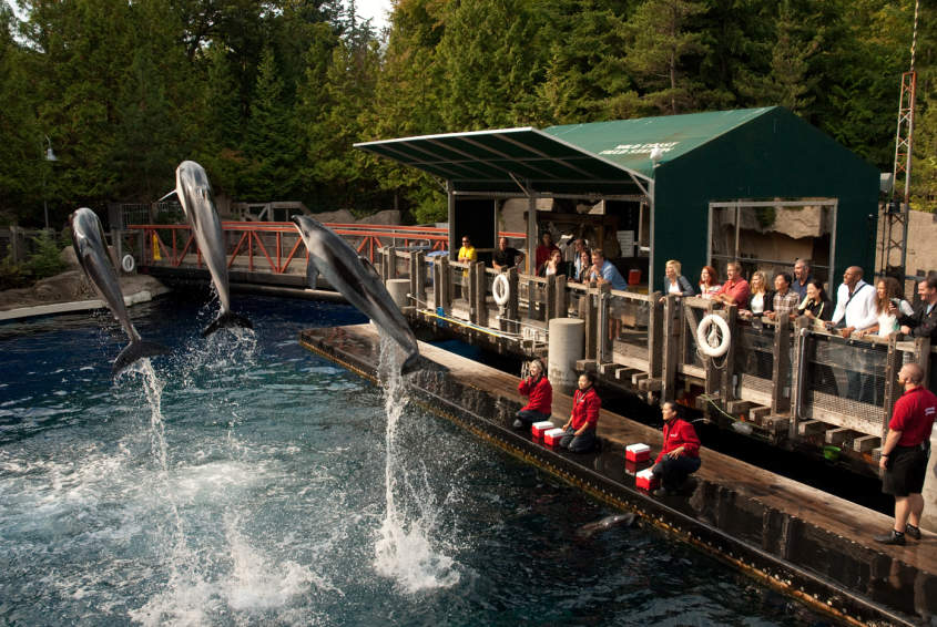 Stanley park attractions the vancouver aquarium vancouver aquarium publicscrutiny Image collections