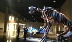 giant sloth hmns