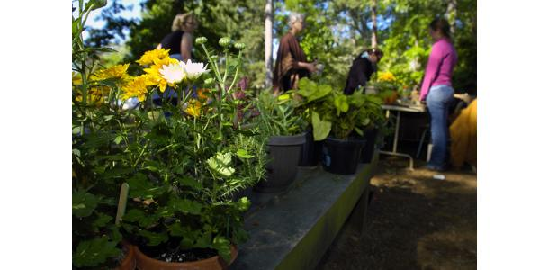 SFA Gardens to host Spring Plant Sale