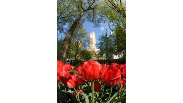 Central Park 1517