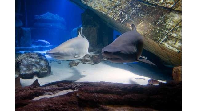 Atlantis Marine World Aquarium 1329