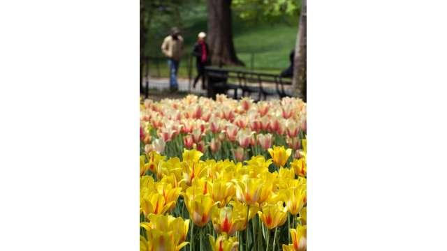 Central Park 1503