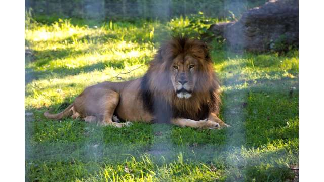 Utica Zoo 514