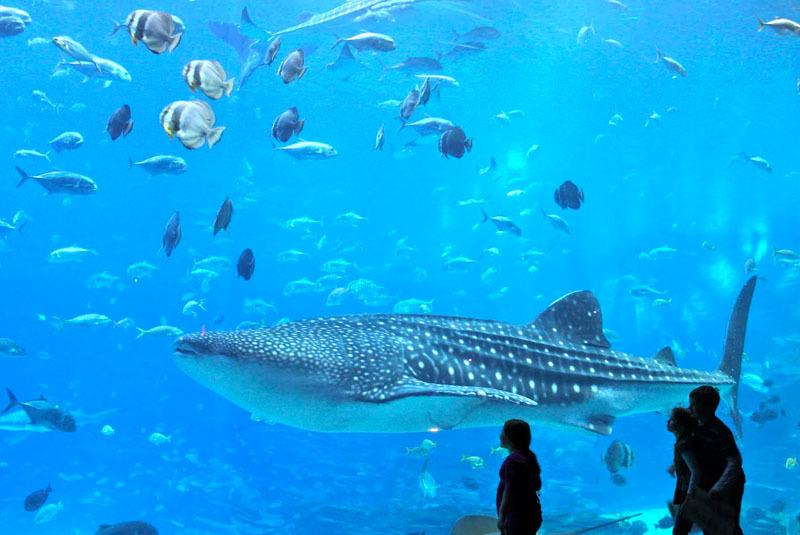 Exceptionnel Aquarium NO43
